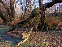 Tree - www.tothpal.eu